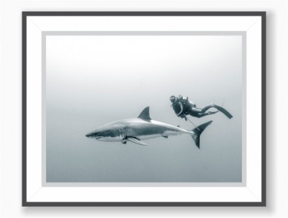 Poster Black & White - Great White Shark