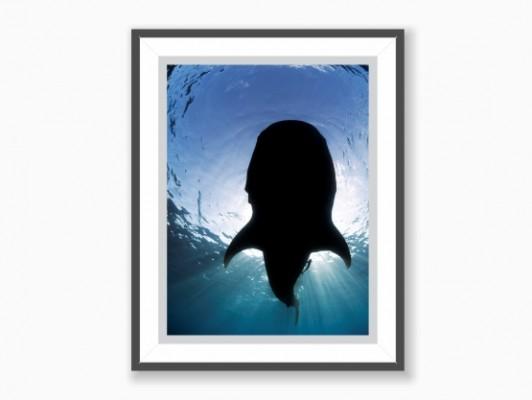 Poster Sunny Shark